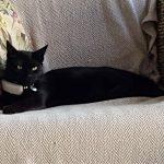 The cat collar dilemma