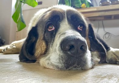 Beethoven's second……..interview with his furever family!