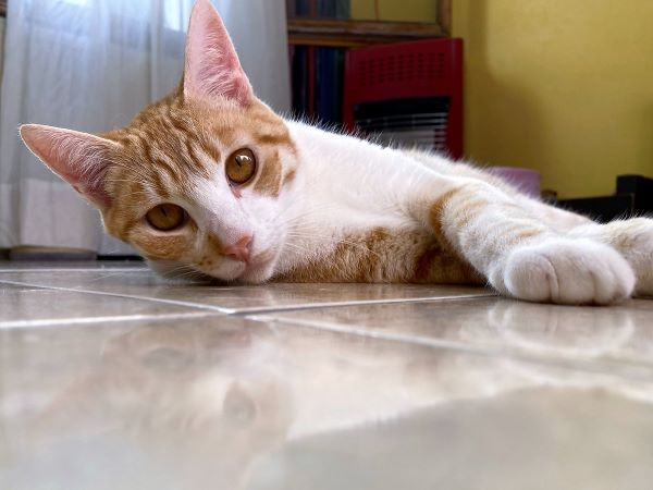 Should you adopt a cat with a diagnosed illness?