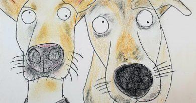Portraits of a shelter dog
