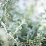 utomhusblommor grön