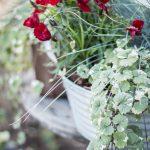 röda blommor grön hängande växt