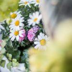 rosa dekorations fjäril vita blommor murgröna