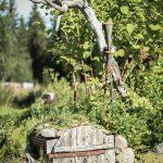 trädgårdsinspo liten trädörr