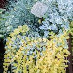 silver växt grön hängande växt snäcka