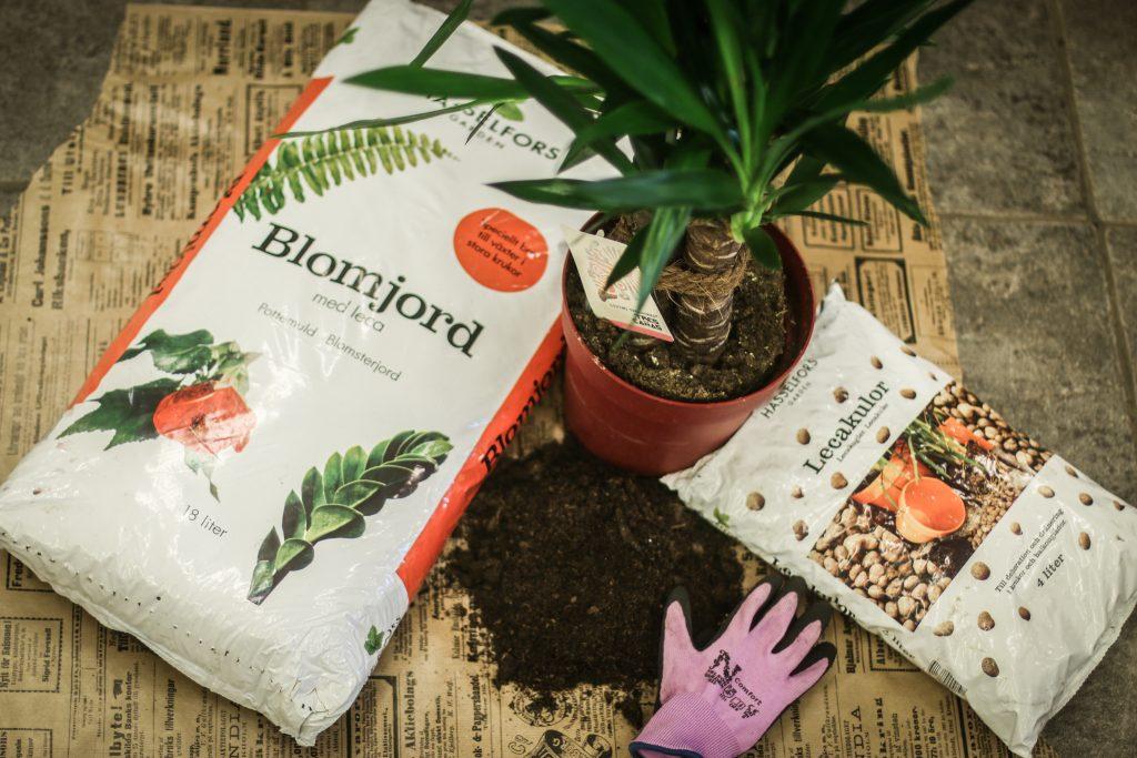 blomjord plantering lecakulor grön växt