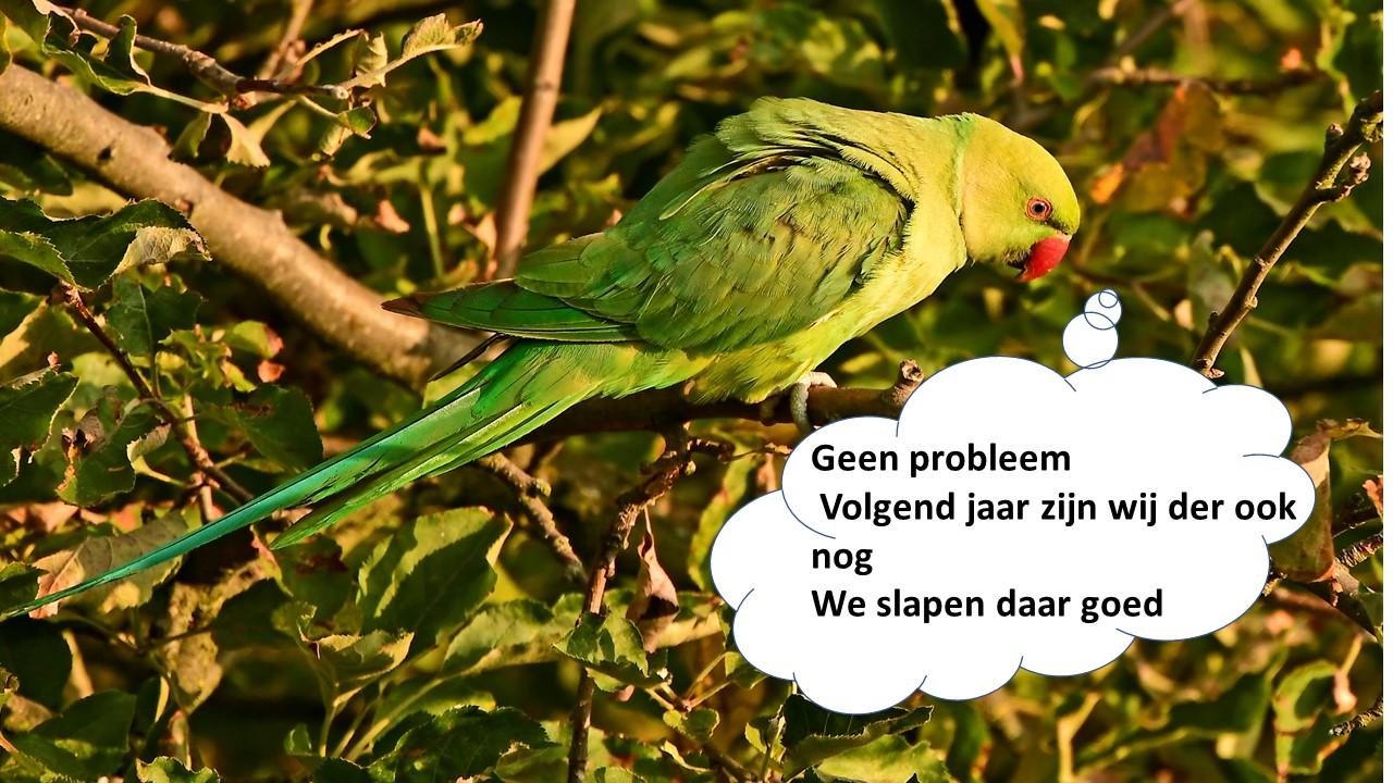 Afbeelding met klein, vogel  Automatisch gegenereerde beschrijving