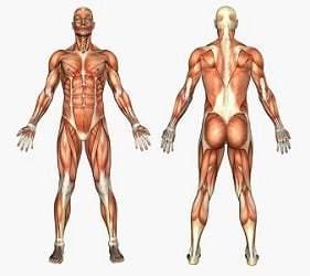 Helse og kropp