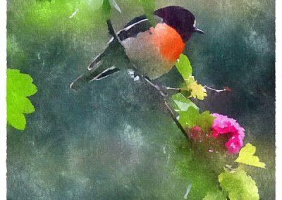 Flower robin