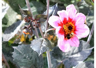 Rosa blom