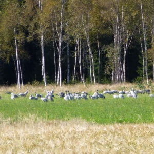 23 augustus 2012, Sweden