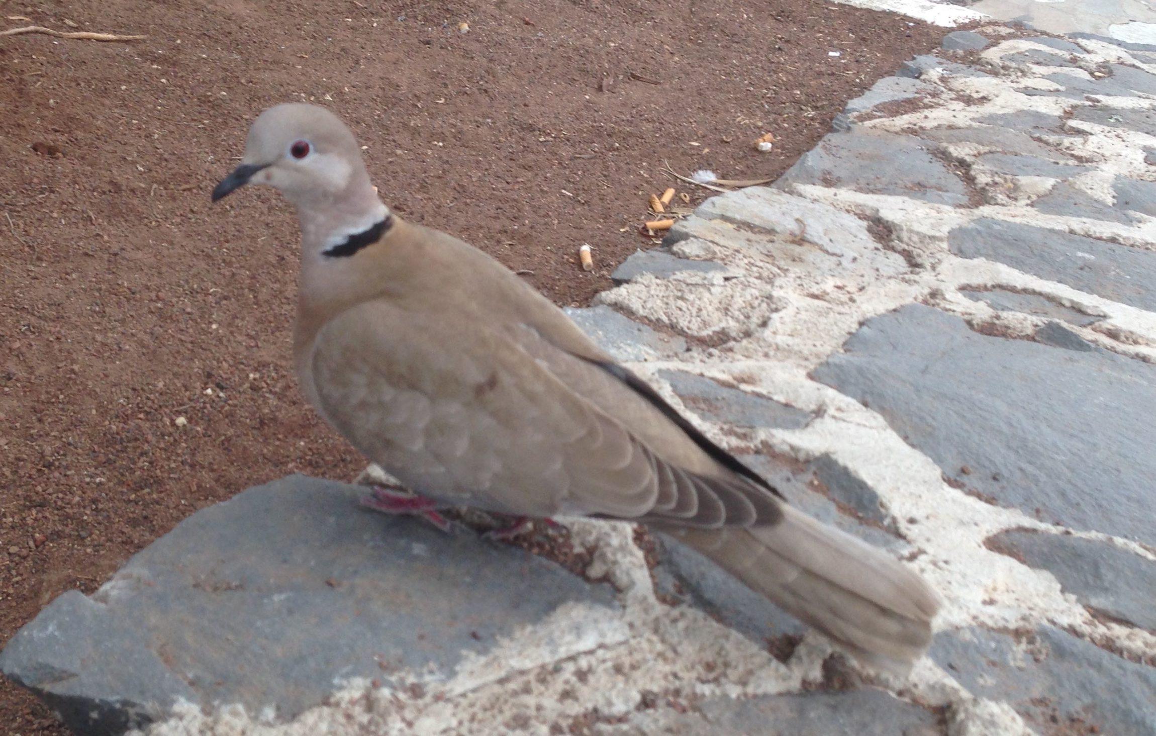 februari 2016,Tenerife Spain