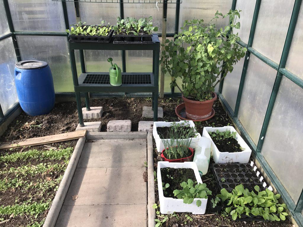 Jungpflanzenanzucht im Gewächshaus im Frühjahr