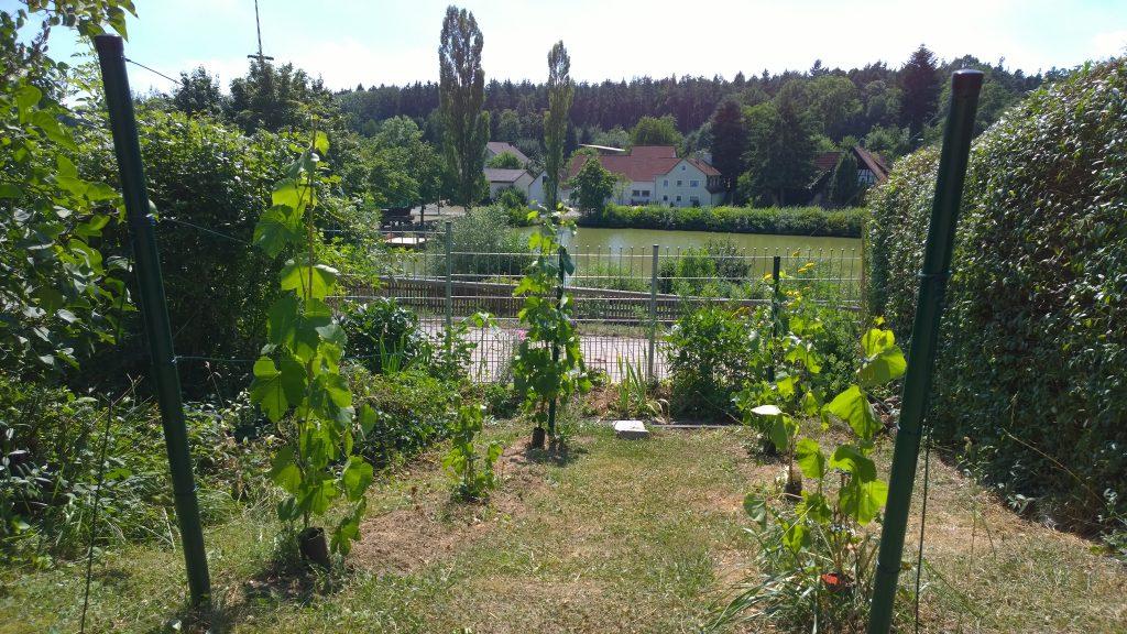 Der Weinberg - Bucher Weiherblick - im Vorgarten