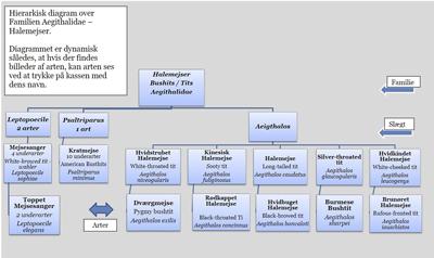 Slægtskab diagram 10 halemejse