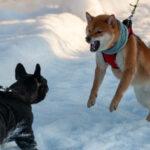 Reaktiver / Überdrehter Hund / Hibbelhund – wie geht man damit um?