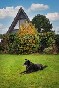 Hund im Ferienhaus Küstenkind Butjadingen Fedderwardersiel