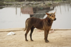 SAM_8540_Fotor-hond-8