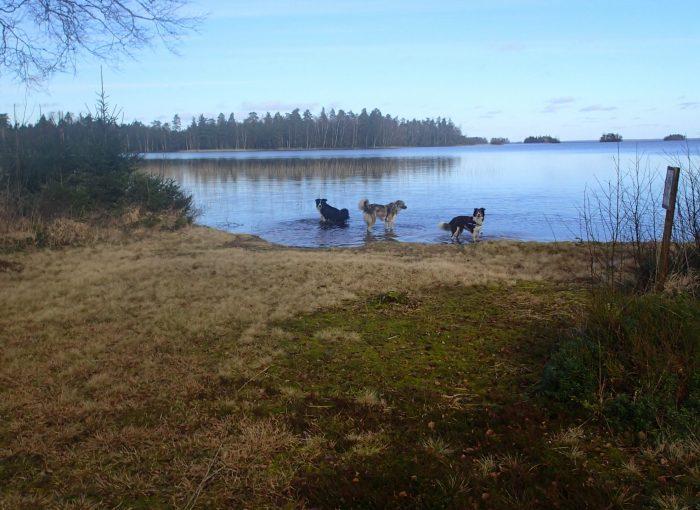 Wanderung mit Hund am Bolmen