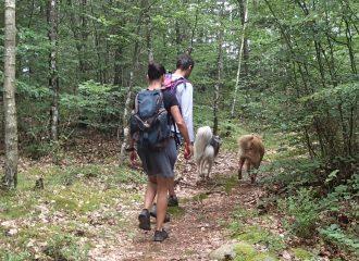 Singletrails mit Hund in Hallands län