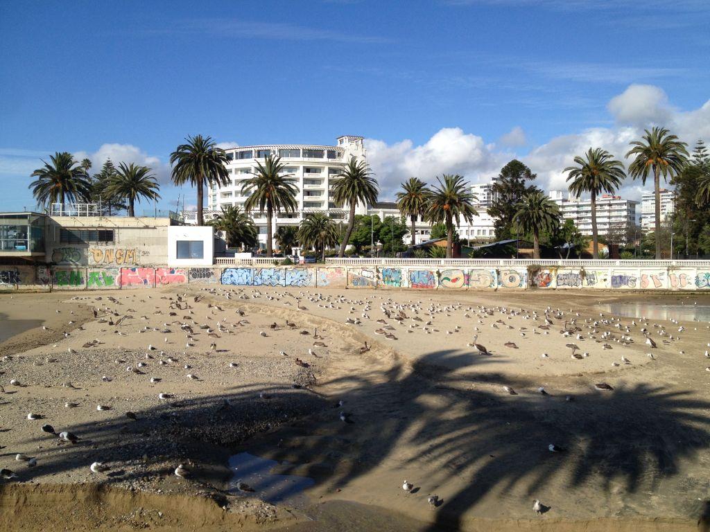 Palmen in Viña del Mar