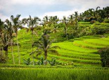 Warum reisen alle nach Bali