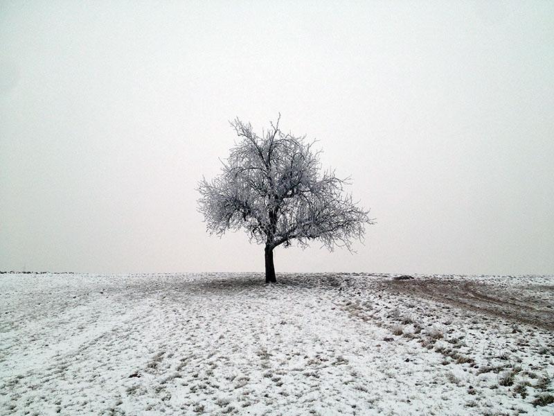 Baum im Schnee - Wieder in Deutschland