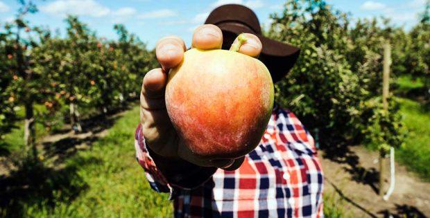 Fruit Picking in Deutschland - als Erntehelfer Jobben