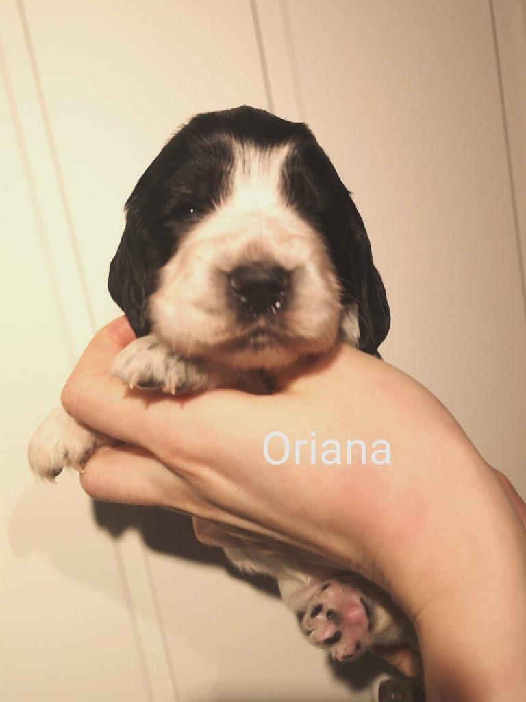 Oriana25u-hode-768x1024.jpg