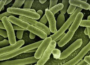 Varför prebiotika är viktigare än probiotika