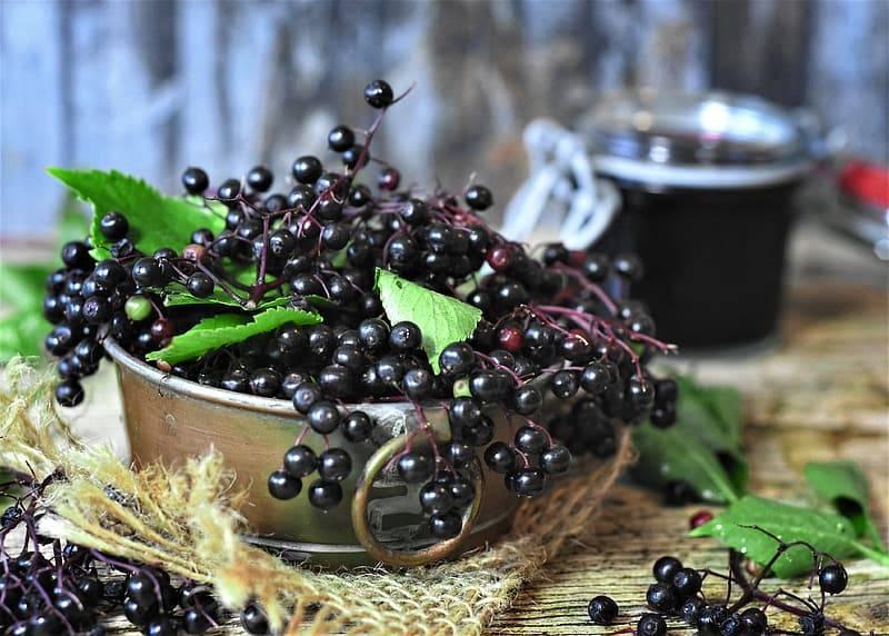 En skål med klase svarta fläderbär och gröna blad som står på ett bord, fläderbär stärker immunförsvaret
