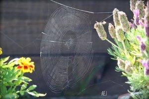 Blommor framför spindelnät, Karolines way of life hälsoblogg