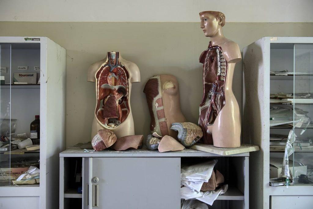 visningsdockor kroppar i klassrum isärplockade ståendes på skåp i klassrum visar immunförsvaret
