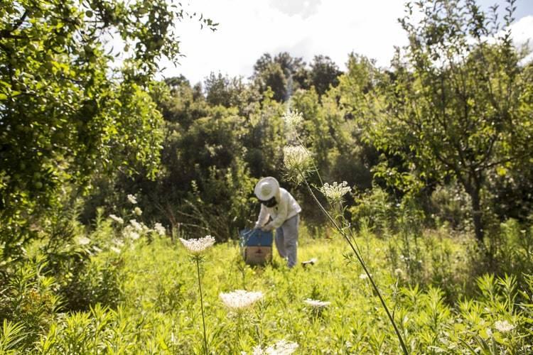 Biodlare klädd i bikläder står över en bikupa i naturen. Bikupan står på en öppen yta med buskar och växtlighet runt om kring. Det växter blommor och solen skiner. Biodlaren håller i den översta lådan på bikupak