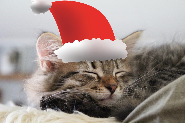God Jul Boråskatten