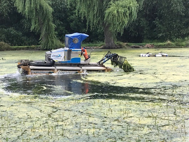 Algae is removed from St Peter's Pool
