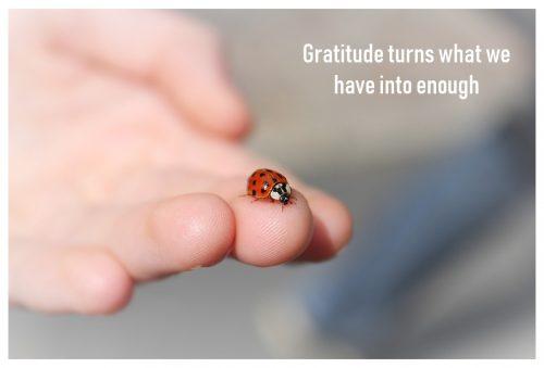 adybug-gratitude-enough