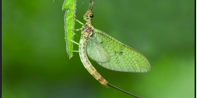 FIAP Gold - Best Insect