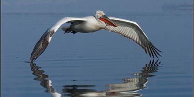 FIAP Gold - Best Bird