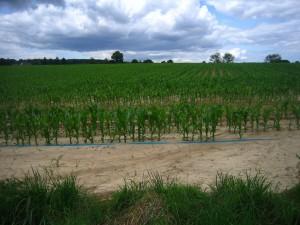 Linon_agricole08