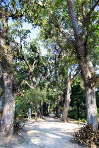 Mangové stromy