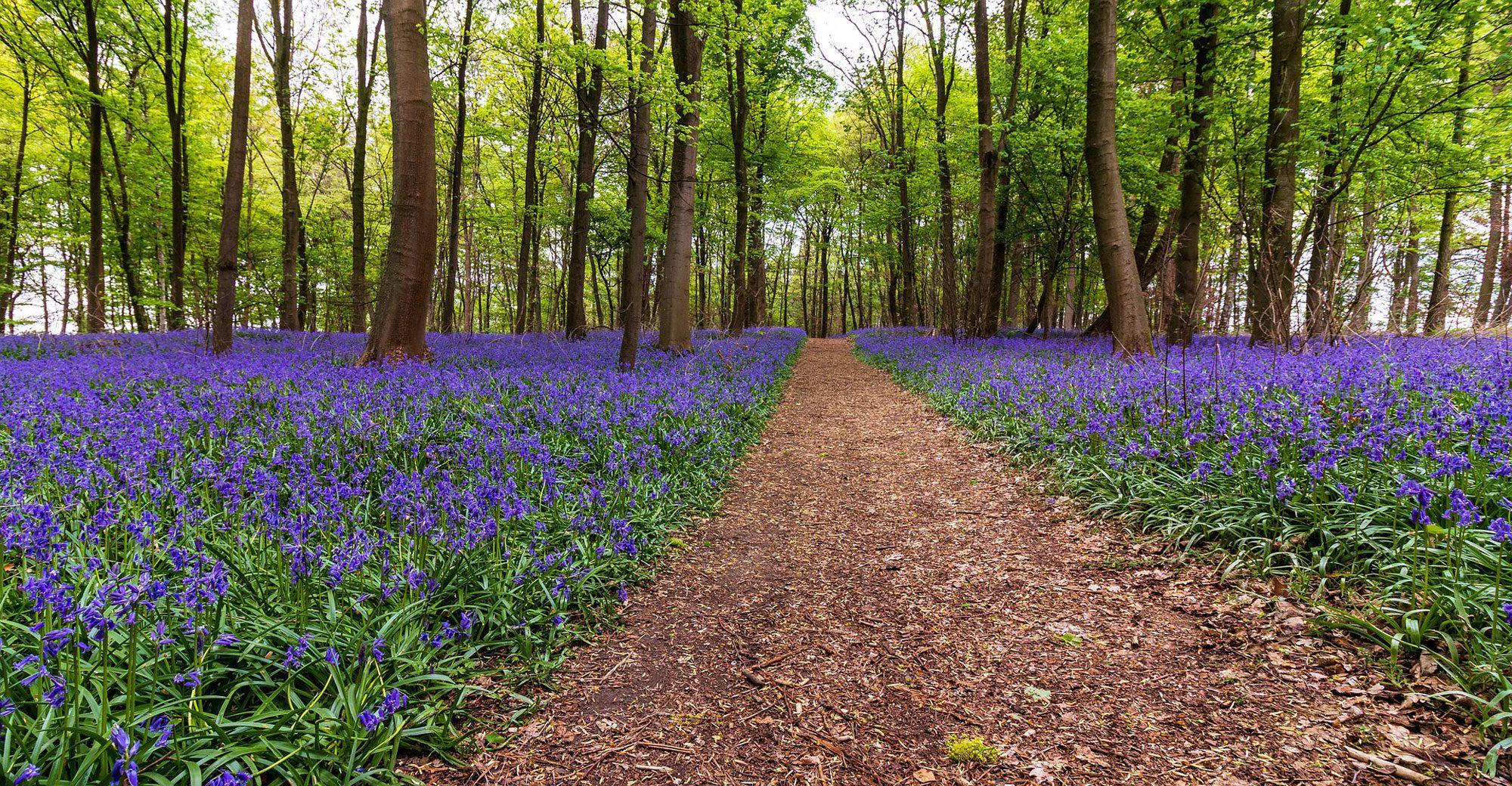 日本では、春と言えばお花見ですが、イギリスでは?