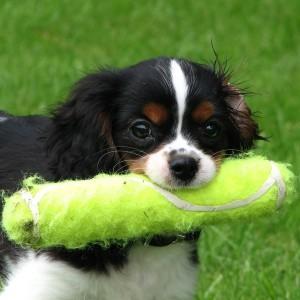 Hond Speeltjes