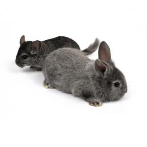 Knaagdier en konijn