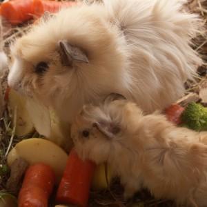 Voeding Knaagdieren en konijn