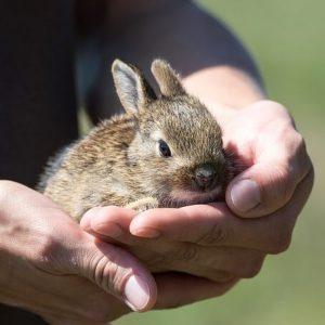 Verzorging knaagdieren en konijn
