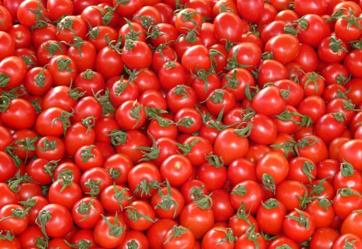 den norske tomaten