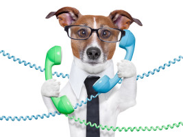 Hund Telefon