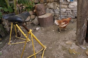 laufen 2 Hühner herum