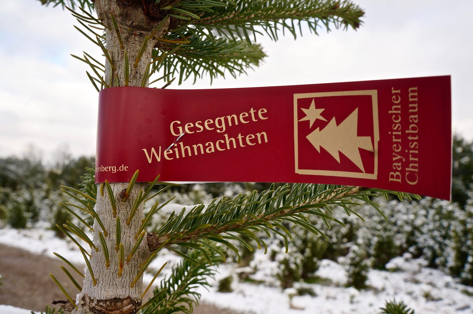 Ein bayrischer Christbaum